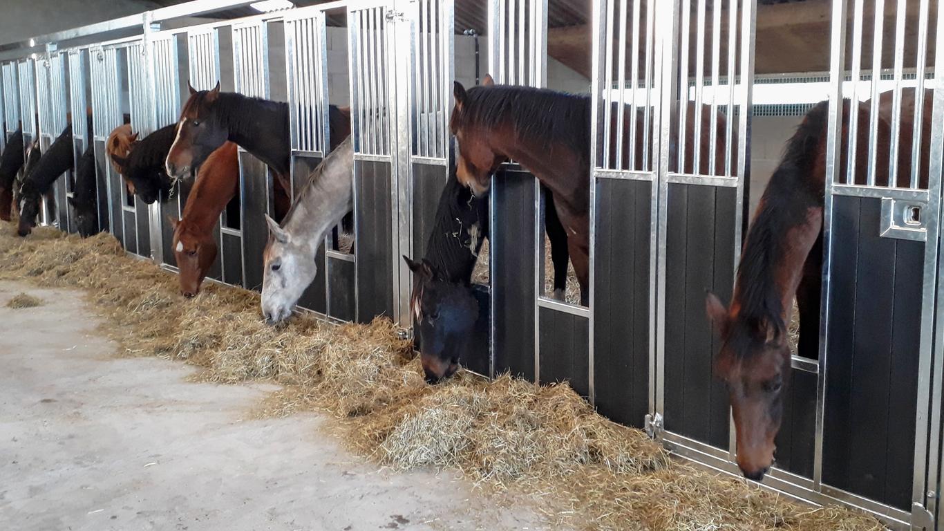 paardenstoeterij